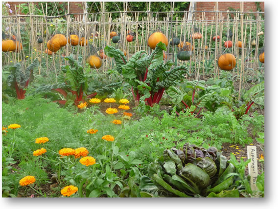 KITCHEN GARDEN AT CHARTWELL IN SEPTEMBER